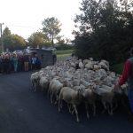Ce week end à Sarlat : Journées du goût et de la gastronmie